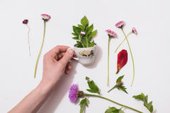 Flower small circle in a man`s hand with a composition of wild purple flowers on  background. Chay of nature. Concept. Summer atmosphere. Tea party with the Royalty Free Stock Photo