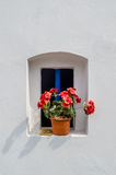Flower in small windows. Pink flower in small blue windows with white wall Stock Photos