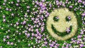 Flower smiley on the grass decorative background Stock Photos