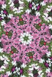 Flower Snowflake. Kaleidoscope Snowflake from Flowers Stock Photography