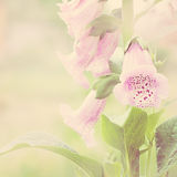 Flower. Soft blur background with lilac flowers Royalty Free Stock Photo