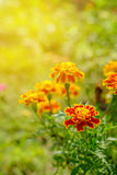 Flower in soft and warm light. Royalty Free Stock Photo