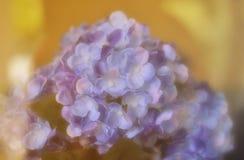 Flower in softfocus Stock Image