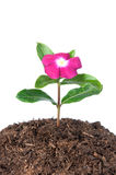 Flower in soil Stock Photo