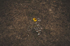 Flower of solitude Stock Photos