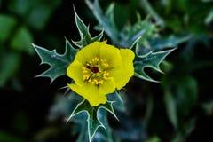 Flowers of Dinajpur, Bangladesh. royalty free stock image