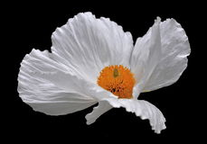 Flower. A flower, sometimes known as a bloom or blossom, is the reproductive structure found in plants that are floral The biological function of a flower is to royalty free stock photography