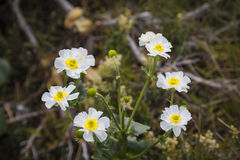 Flower in the Southern Alps Stock Images