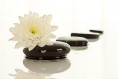flower spa πέτρες στοκ φωτογραφία με δικαίωμα ελεύθερης χρήσης