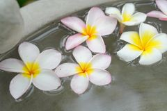 Flower spa Stock Photo