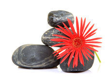 Flower and spa stones Stock Photo