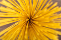 Flower of spaghetti gathered in a bunch, view from the top Royalty Free Stock Photography