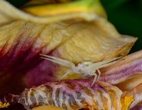White flower spider Stock Image