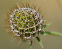 Flower with spikes - macro Stock Images
