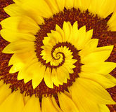 Flower Spiral Stock Image