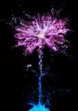 Flower splash royalty free stock photography