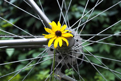 Flower in spokes. Yellow flower stucks in the bicycle spokes, concept of healthy lifestyle. Outdoor shot with particular focus stock photo