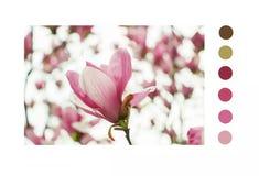 Magnolia denudata Desr royalty free stock image