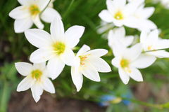 Flower spring Stock Photography