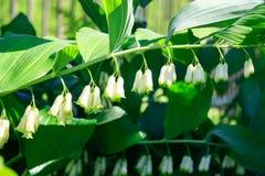 Flower. Spring flowers bell flower branch Stock Image