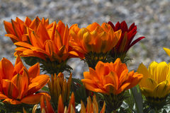 Flower in spring Stock Photos