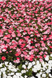 Flower in spring Stock Photo