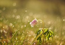 Flower, Spring, Meadow, Nature Stock Images