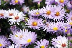 Flower spring season Royalty Free Stock Photography