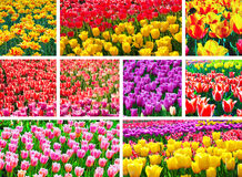 Flower spring Royalty Free Stock Photos