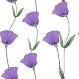 Flower spring violet. This is illustration of flower pattern Royalty Free Stock Photography