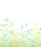 Flower spring on white background Stock Photos