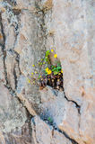 A flower sprouted up through the rock. Overcoming self concept Stock Image