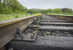 Flower sprouting between railway sleepers Stock Photo