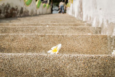 Flower on stair Royalty Free Stock Images