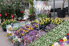 Flower Stall Stock Image