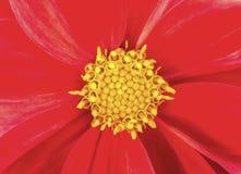 Flower stamen. Closeup of red flower stamen stock photos