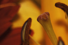 Flower stamen Stock Photo