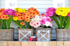 Flower stand with Gerberas Stock Photography