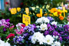 Flower stand  in spanish street. Stock Photography