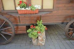Flower stands . Stock Photos