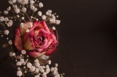 Flower still life. Beautiful stock photo