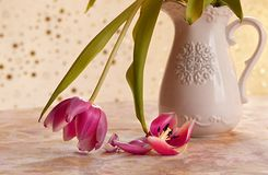 Flower, Still Life Photography, Vase, Plant royalty free stock image