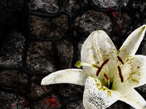 Flower and Stone Royalty Free Stock Photo
