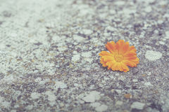Flower. On the stone floor Royalty Free Stock Images