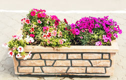 Flower in the stone flowerbed. Royalty Free Stock Photos