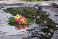 Flower in the stone and pond.  stock image