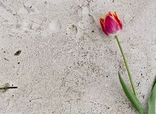 Flower on a stone slab Royalty Free Stock Photos