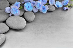 Flower and stone zen spa on grey background. Beautiful flower and stone zen spa on grey background Royalty Free Stock Photos