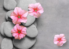 Flower and stone zen spa on grey background Royalty Free Stock Image