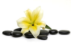 Flower and stones. Lily with spa stone on the white background Royalty Free Stock Photography